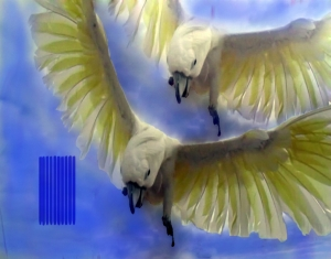 """""""Merlin Flies"""" from Blue Cockatoo photo series by Joanna Hartell"""