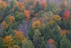 Fall Foliage on Sept 30